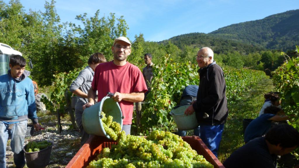 Achard-Vincent, un avant-gardiste du vin bio au pays de la Clairette